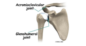 Glenohumeral and Acromioclavicular joint